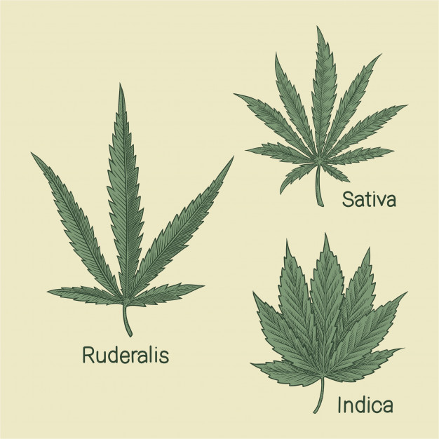 Indica vs Sativa – Marketing Bad Cannabis Science